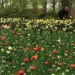 Floralia Garden and Planter