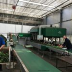 Tulip Farm Machinery