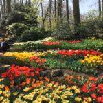 Keukenhof Gardens